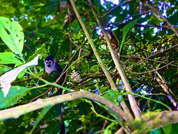 photo of a primate in a tree